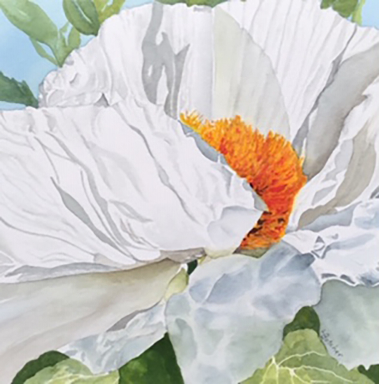 White Tree Poppy by Linda Butcher